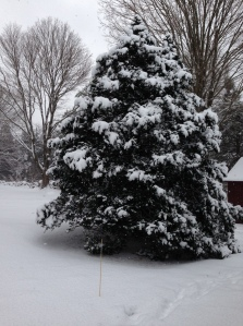 Tree with snow in the backyard