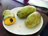 Pickin' up pawpaws…